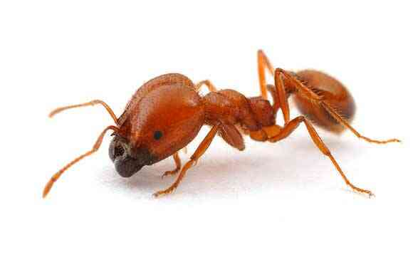 Natural Way To Get Rid Of Fire Ants