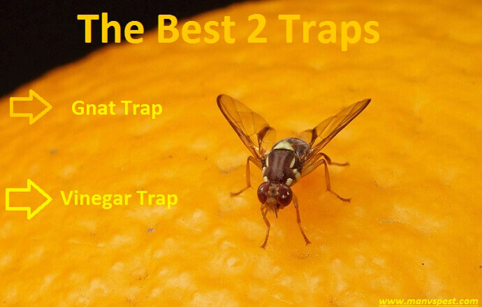 The Best Traps for Getting of Fruit Flies