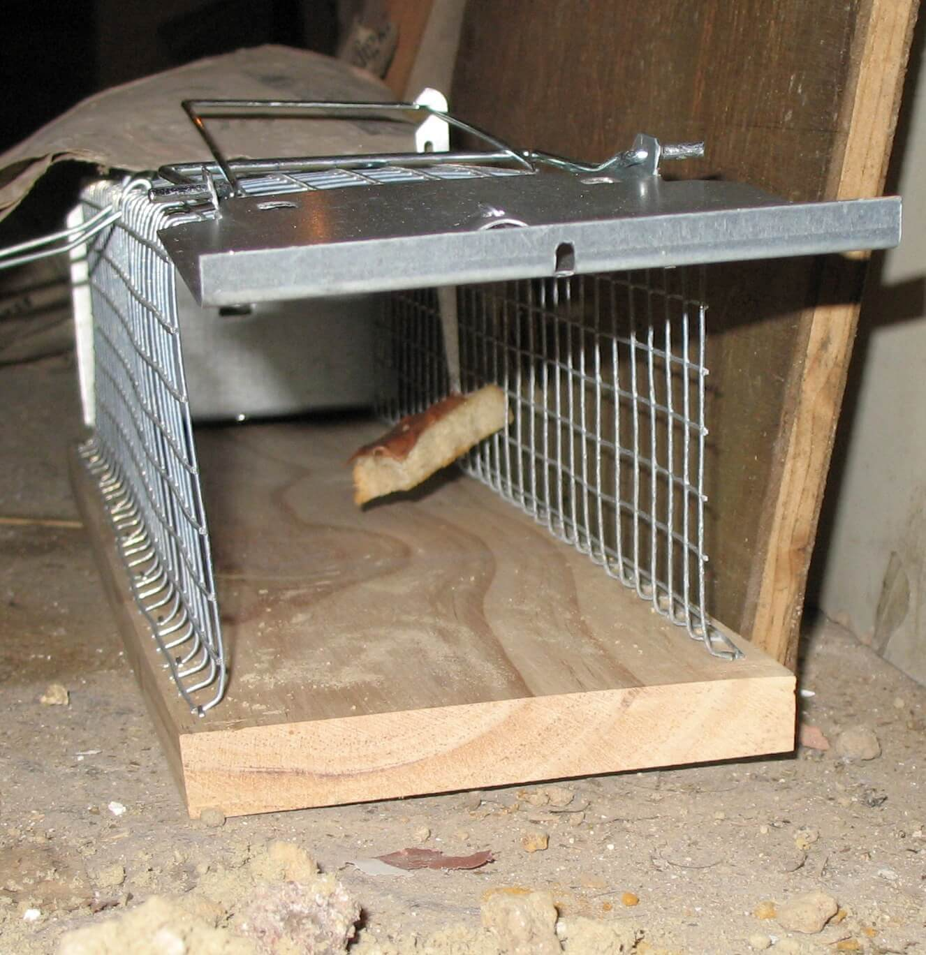 best baits for rat trap