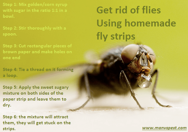 get rid flies in your house