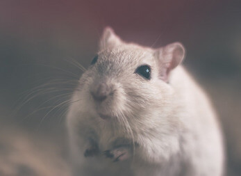 The Ultimate Guide To Get Rid Of Rodents