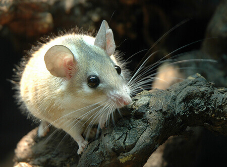 types-of-rodent