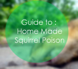 Squirrel Poison Home Made Way To Kill Amp Get Rid Forever