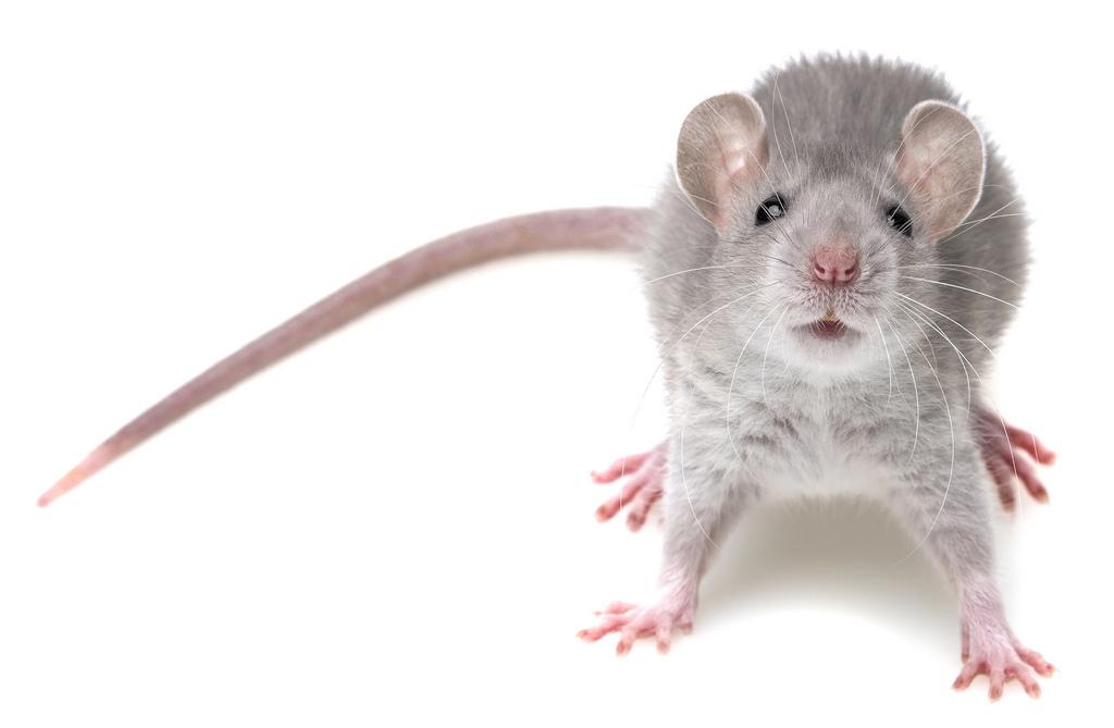 ultrasonic pest repeller on mice
