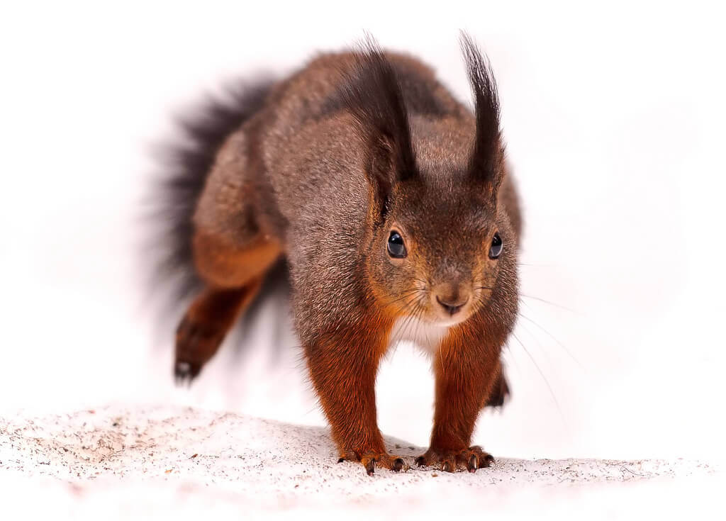 squirrel running from poison