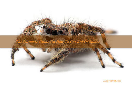 featured-for-spider