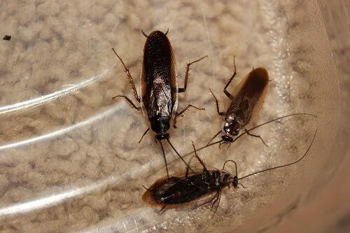 get-rid-of-wood-roach