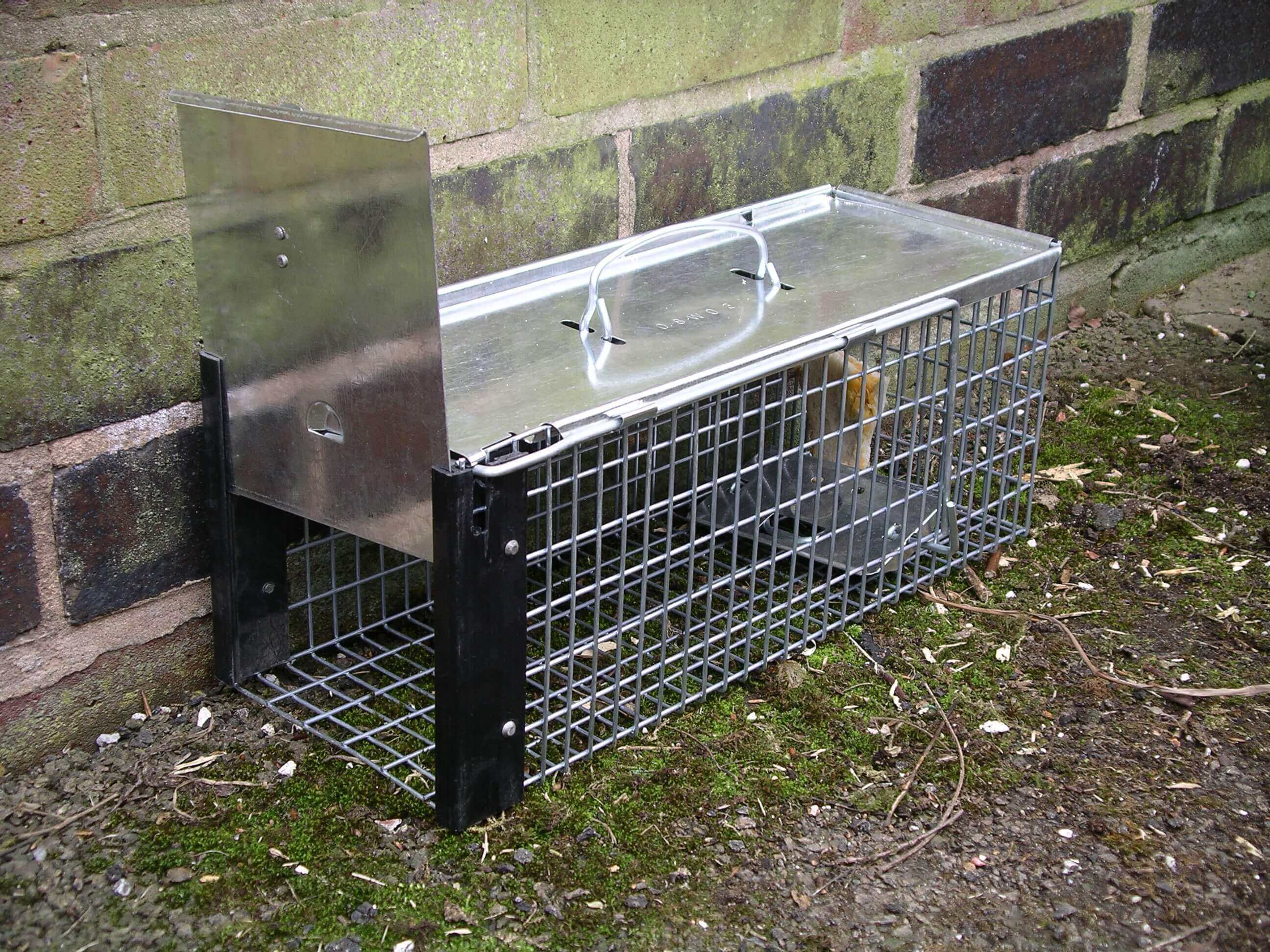 a rat cage trap