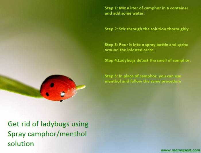 get rid of ladybugs