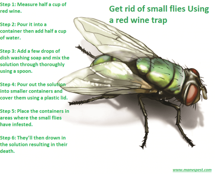 ged rid of small flies