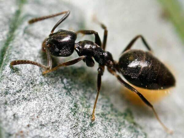 get-rid-of-ant