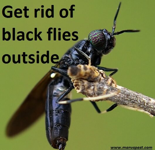 get rid of black flies outside