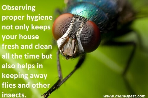how to get rid of flies in your house
