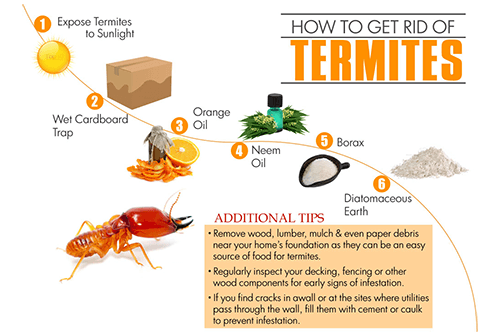 How To Get Rid Of Termites A Step By Step Termite