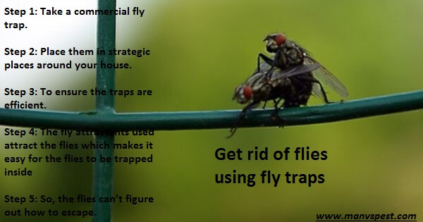How To Get Rid Of Flies Outside