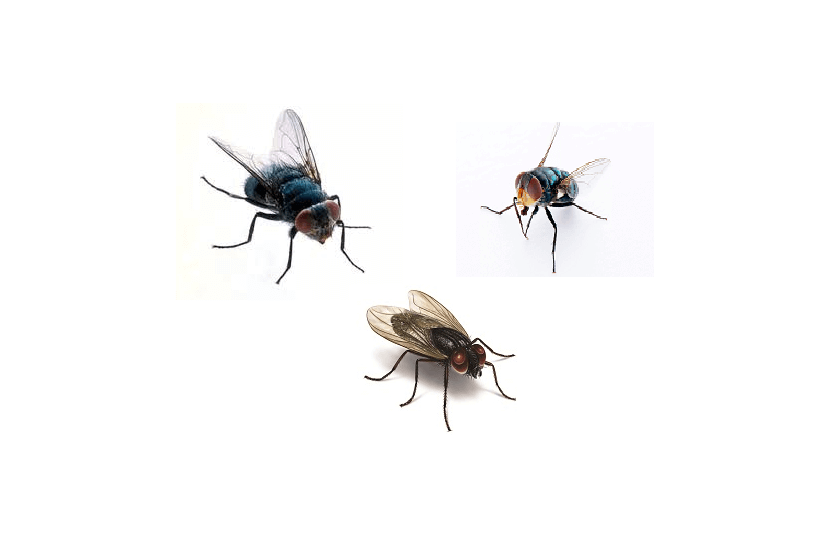 ultimate guide to control flies