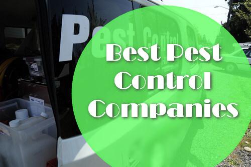 best pest control companies